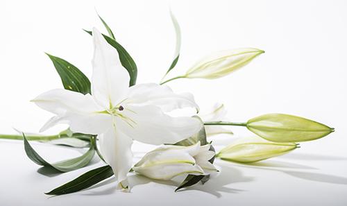Funeral Celebrant Services by Jack Burns – Funeral Program Background